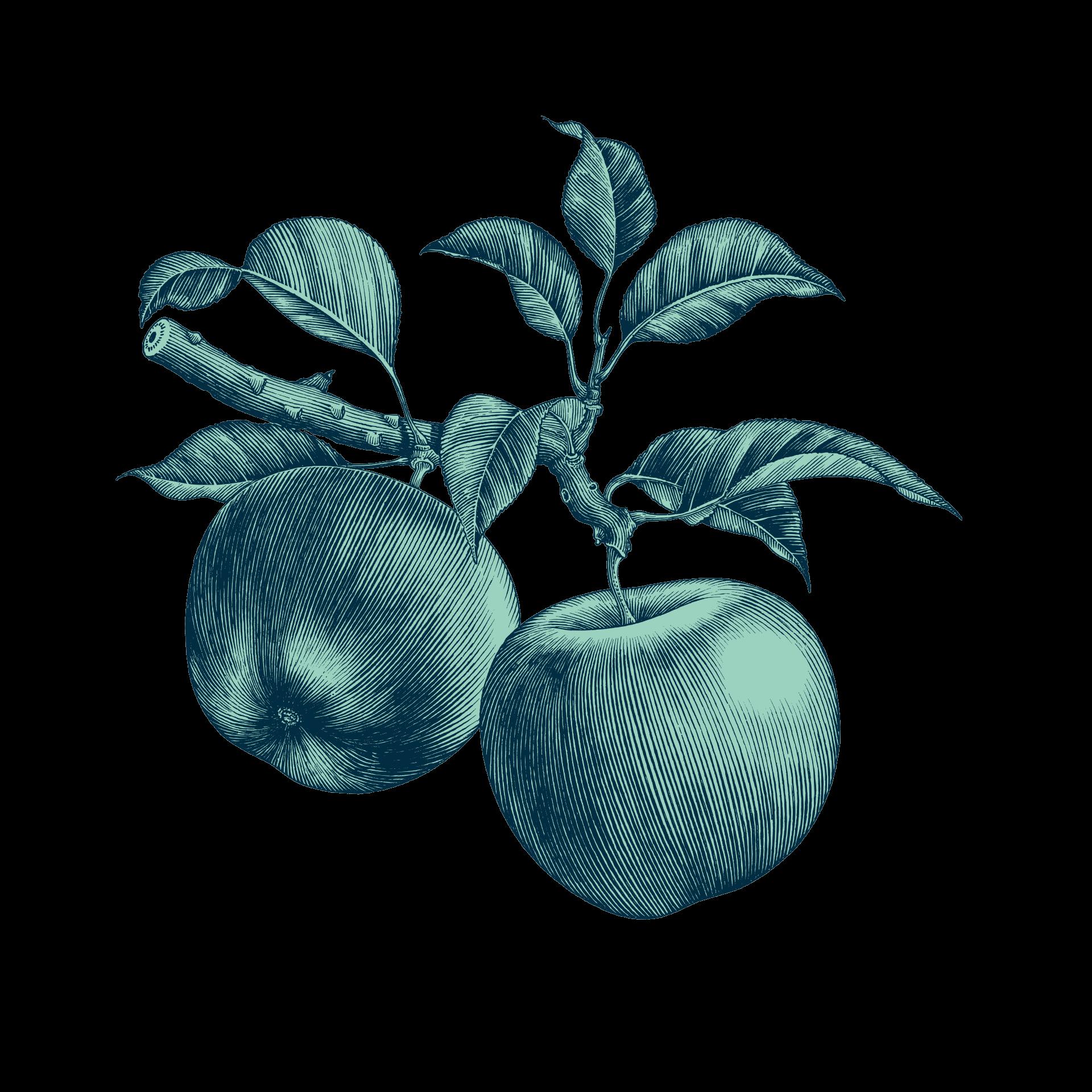 Illustration de pommes